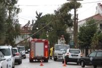 Fethiye'deki Şiddetli Fırtına Ağaçları Devirdi
