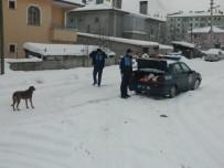 Ilgaz Belediyesi Sokak Hayvanlarını İçin Yem Bıraktı