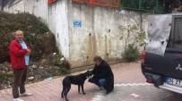 İzmit Zabıtası'ndan Sokak Hayvanlarına Yardım Eli
