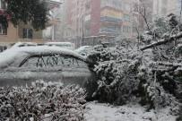 ATATÜRK BULVARI - Manisa'da 50 Yıllık Ağaç Karın Ağırlığına Dayanamayarak Devrildi