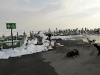 Büyükşehir'den Sokak Hayvanlarına Yönelik Yeni Uygulama