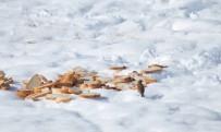 Göl Kuşları İçin Ekmek Attılar