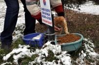 Karabük Belediyesi Sokak Hayvanlarını Unutmadı