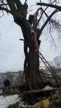 Ağaç Budarken Feci Ölüm