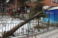 Eskişehir'de Bir Okul Bahçesindeki Ağaç Devrildi