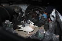 Otomobil Çalıp Güvercin Gasp Eden 5 Kişi Tutuklandı