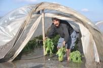 AFET BÖLGESİ - Selin Vurduğu Çiftçiler Yardım Bekliyor