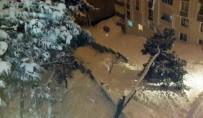 Yarım Asırlık Çam Ağacı Kar Yağışına Dayanamadı