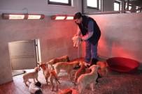 DONMA TEHLİKESİ - Donma Tehlikesi Geçiren Sokak Hayvanlarına Otel Sıcaklığı