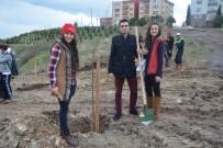 AHMED-I HANI - Körfez'de Ağaçlandırma Çalışmaları Sürüyor