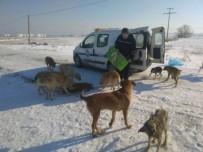 Marmaraereğlisi'nde Karla Mücadelede Sokak Hayvanları Unutulmadı