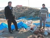 SERDAR KıLıÇ - Niğde'de 500 koyun, ölü kuzu doğurdu