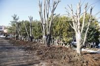 ORMAN ALANI - Odunpazarı Belediyesi'nden Açıklama;