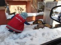HAYVAN SEVERLER - Sokak Hayvanlarına Altıeylül Şefkati