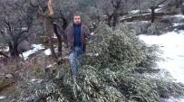 AFET BÖLGESİ - Aydın'da Kar Felaketi