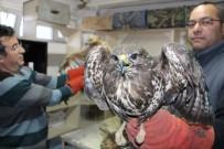YIRTICI KUŞ - Kara Kış Yırtıcı Kuşları Da Vurdu