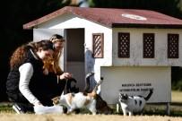 HAYVAN SEVERLER - Muratpaşa Belediyesi, 18 Yeni Kedi Evi Yerleştirdi