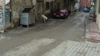 ÇAY OCAĞI - 'Kuduz' Alarmı Verildi