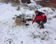 Odunpazarı Belediyesi Sokak Hayvanlarının Yardımına Koşuyor