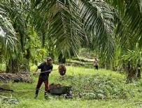 GIDA GÜVENLİĞİ - Gıda, Tarım ve Hayvancılık Bakanı Çelik: Palm yağı kullanılan ürünler araştırılacak