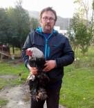 HIRSIZ - Sağlıkçının Yine Tavukları Çalındı