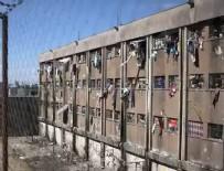 BREZILYA - Cezaevi isyanında inanılmaz vahşet