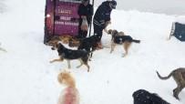 HAYVAN SEVERLER - Kartepe Belediyesi Sokak Hayvanlarını Unutmadı