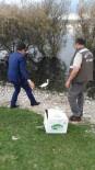 REHABILITASYON - Yabani Kuşlar Tedavi Edildikten Sonra Doğaya Bırakılıyor