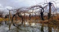 ÜZÜM BAĞI - Bağlar Göle Döndü Üreticinin Yüzü Güldü
