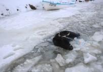 BEYŞEHIR GÖLÜ - Donan Gölde Kırılan Buzdan Suya Düşen İnek Böyle Kurtarıldı