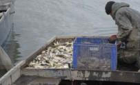 SU ÜRÜNLERİ - Elazığ'da 200 Kilogram Kaçak Balık Yakalandı