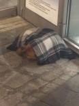 SOKAK KÖPEĞİ - Eskişehir Halkı Sokak Hayvanlarına Duyarsız Kalmıyor