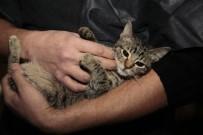 ODUNPAZARI - Odunpazarı'ndan Evinde 17 Sokak Hayvanı Besleyen Vatandaşa Yardım Eli
