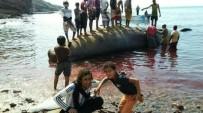 YEMEN - Aden'de Balıkçılar Deniz Sahiline Vurmuş Amber Balinası Buldu