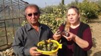 MANGO - Emekli Memur Çift, Çikolataya Alternatif Ağaç Yetiştirdi