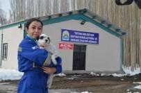 HAYVAN HAKLARı FEDERASYONU - Tatvan'da Hayvan Hastanesi Kuruldu