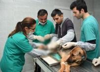 HAYVAN BAKIM EVİ - Trafik Kazası Geçiren Köpek Ve Yavrularına Belediye Sahip Çıktı