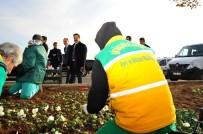 CUMALI ATILLA - Atilla, Mevsimlik Çiçek Dikimi Çalışmalarını Denetledi