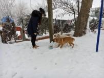 Edirne Belediyesi Sokak Hayvanlarını Unutmadı