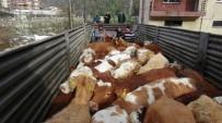 SÜT ÜRÜNLERİ - Rize Gıda Tarım Ve Hayvancılık İl Müdürlüğü Tarafından Vatandaşlara 30.5 Milyon TL Hibe Desteği Sağlandı