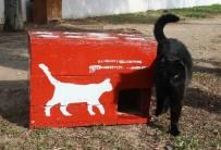 KARABAĞ - Seçim Sandıkları, Kedi Evi Oldu