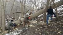 ÇıNARLıK - Yağışlara Dayanamayan Ağaçlar Kesildi