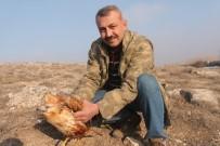 AŞIRI YAĞIŞ - Açlıktan Ölmek Üzereyken Bulunan Şahin Doğaya Bırakıldı