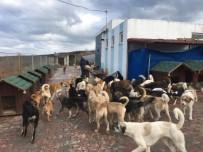 KÖPEK - Adalar Belediyesi'nden Sokak Hayvanlarına Mini Evler