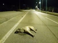 KÖPEK - Aracın Çarptığı Köpek Telef Oldu