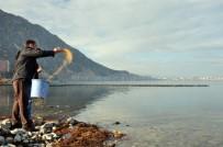 Belediye Göl Kıyısına Kuşlar İçin Yem Bıraktı