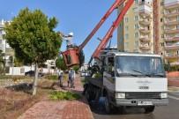 MUHITTIN BÖCEK - Konyaaltı'nda Ağaç Budama Çalışması