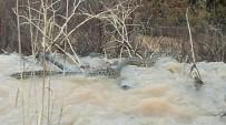 YUMURTA - Manisa'da Görülen Yılanın Tehlikeli Olmadığı Anlaşıldı
