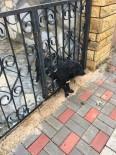 KÖPEK - Parmaklıklara Sıkışan Köpeği İtfaiye Kurtardı