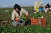 FARKıNDALıK - Tarımda Genç Girişimci Kadınlar Güçleniyor Programı Erzincan'da Başladı